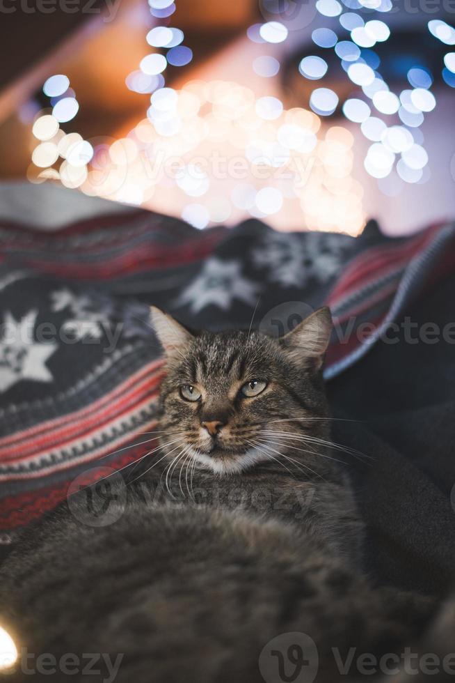 adorável gato deitado na cama foto