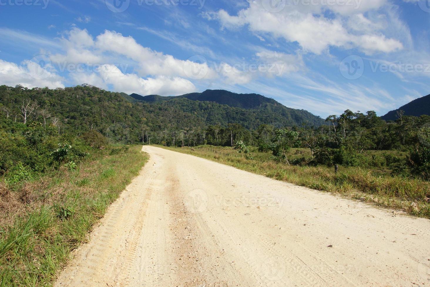 floresta tropical amazônica (selva) na Bolívia foto