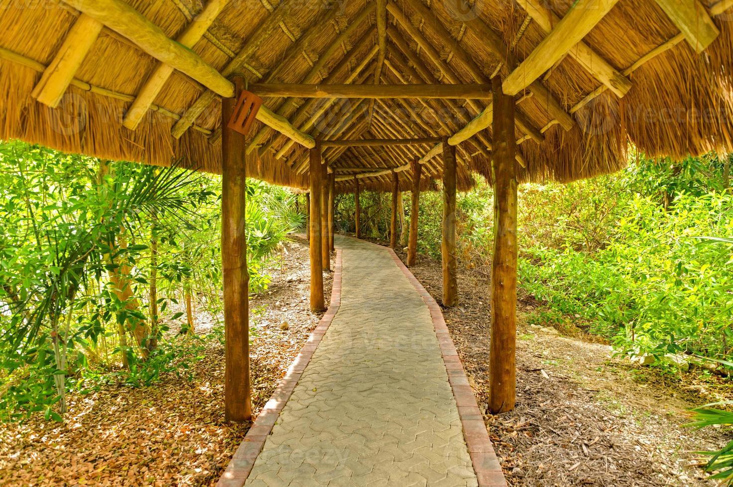 caminho da selva com dossel do telhado de colmo foto