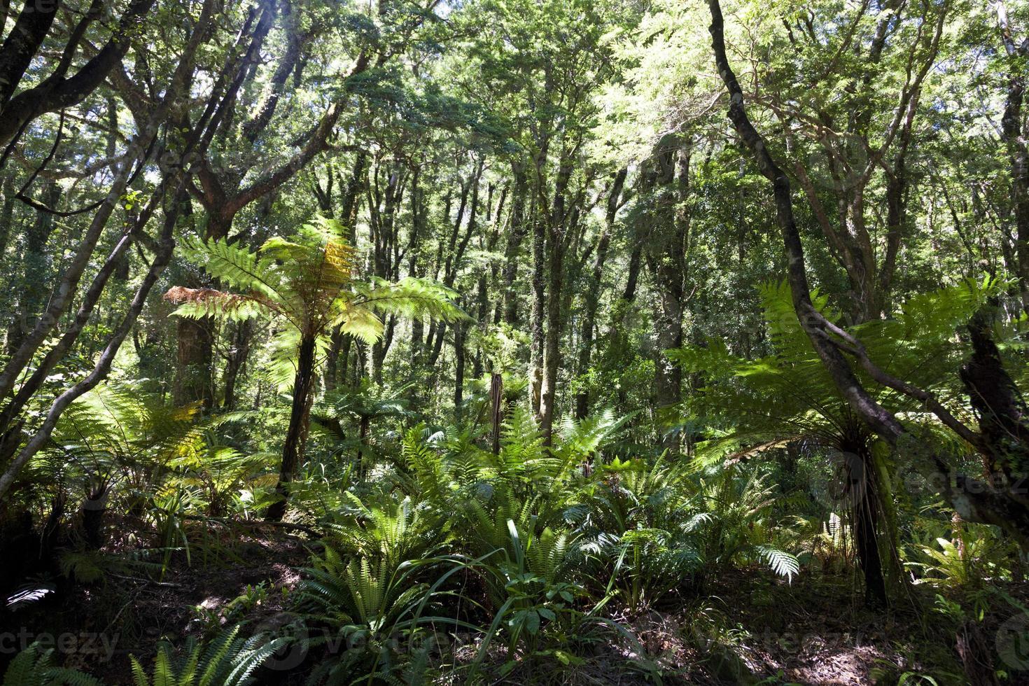 selva fiordland foto