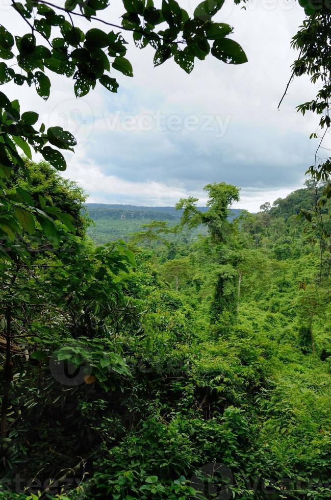 selva cambojana foto