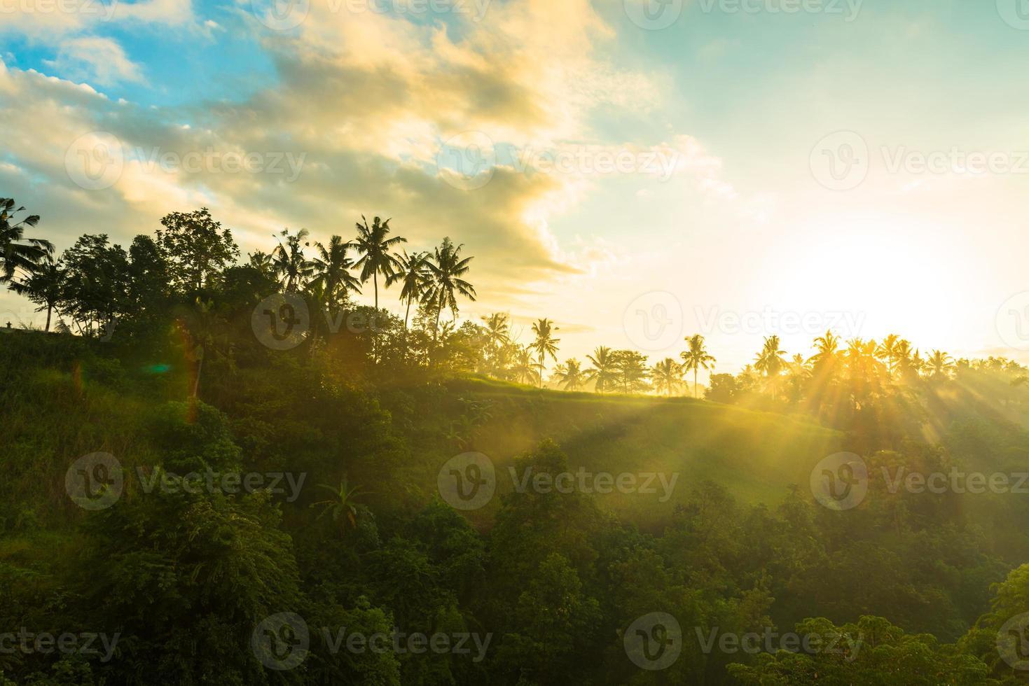 nascer do sol sobre a selva foto