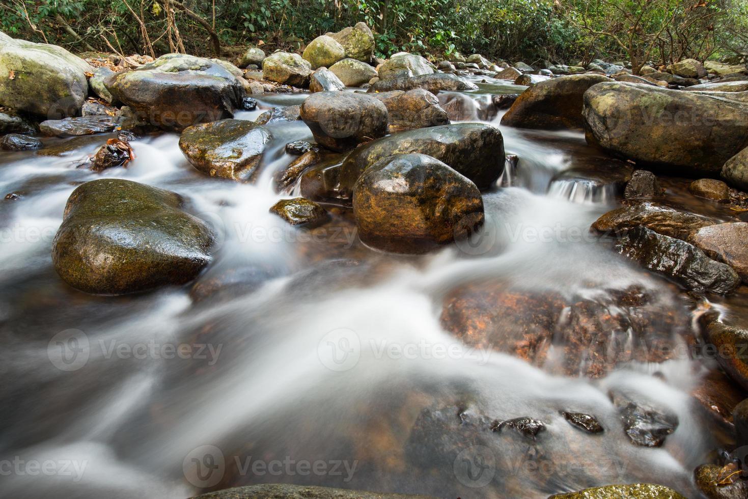 rio na selva foto