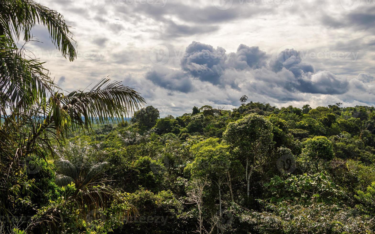 paisagem da selva na reserva de vida selvagem cuyabeno. foto