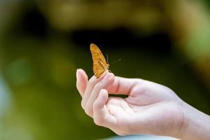 borboleta amarela sentado na mão da menina.