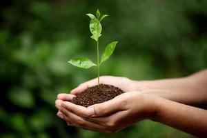 jovem mulher segurando a planta nas mãos dela