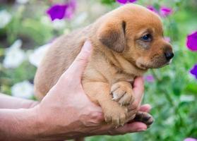 filhote de cachorro bonito em suas mãos foto