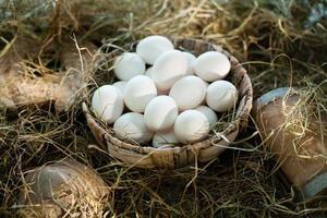 ovos brancos orgânicos no ninho foto