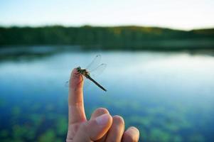 libélula no dedo foto