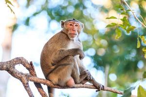 macaco (macaco comendo caranguejo) na árvore na Tailândia