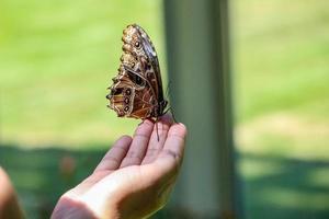 borboleta sentado em uma mão foto