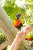 pássaro se alimentando de mão no zoológico foto