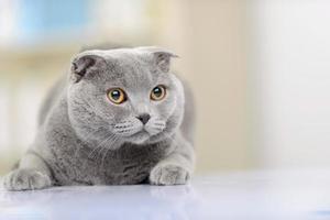 belo gato sentado em cima da mesa foto