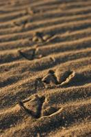 caminhada ondulada foto