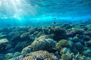 recife de coral subaquático do mar vermelho foto