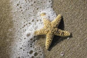 estrela do mar nas ondas foto