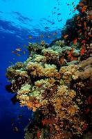 Recife de corais foto