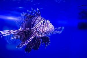 peixe do mar foto