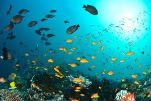 belo oceano e peixes foto