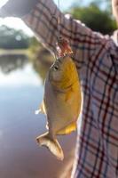 pesca de piranha foto