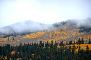 árvores de Colorado Apen foto
