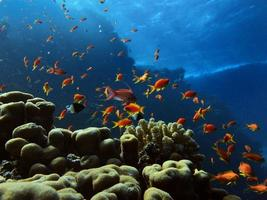 peixe do oceano foto