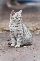 pequeno gato foto