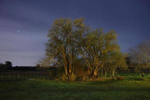 cena noturna de árvores de ombú foto