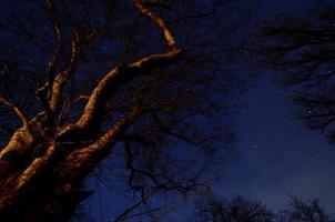 velha árvore e estrelas foto