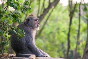 macaco meditando no parque foto