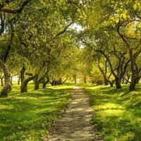 floresta verde foto