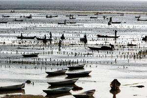Ásia bali nusa lembongan plantação de algas marinhas foto