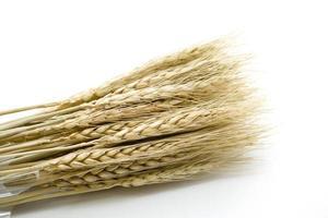 orelha de trigo foto