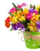 flores de freesia e narciso em pote verde