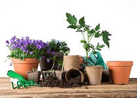 ferramentas e plantas de jardinagem ao ar livre. foto