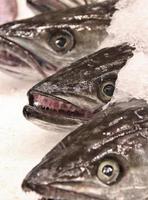 pescada foto