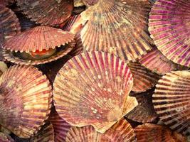 mexilhões coloridos no mercado de peixe chileno foto
