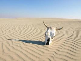 morto no deserto foto