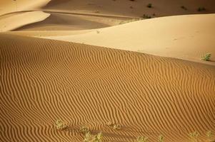 o deserto do Saara foto