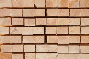pregos de madeira frescos