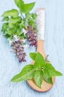 folha de manjericão fresco na colher de pau