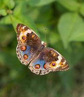 fazenda de borboletas foto