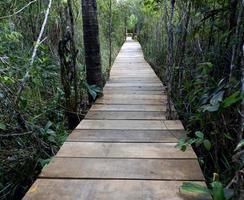 caminho pela floresta foto
