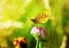 borboleta foto