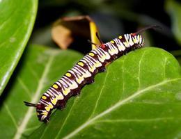 lagarta na natureza