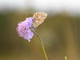 borboleta voada do fio de teia foto