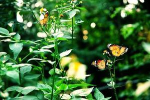 linda borboleta laranja descansando em uma flor branca foto