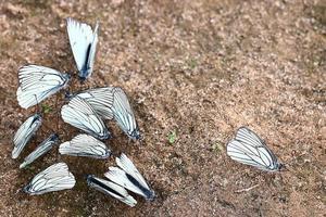 borboletas brancas na areia foto