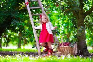 linda garotinha escolhendo bagas frescas de cereja no jardim foto