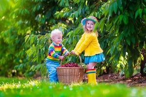 adoráveis crianças colhendo frutas cereja em uma fazenda foto